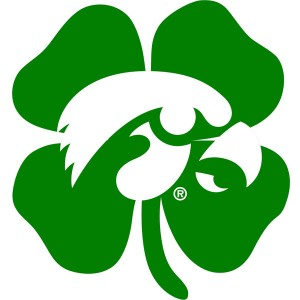 Iowa Hawkeyes Shamrock Decal